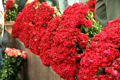 IMG_1359 (asadjaved) Tags: new india flower place market circus delhi mandi rajiv connaught chowk phool