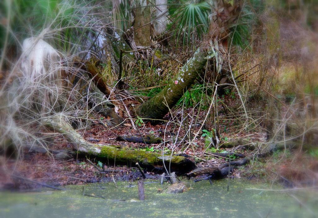 A small pond in Bushman Park