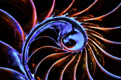 Freaky Nautilus (joegeraci364) Tags: nautilus seashell shell beach shore coast ocean sea animal nature design pattern spiral circle art abstract contrast vivid color image print photograph altered topazlabs adjust fantasy coolpsychedelic