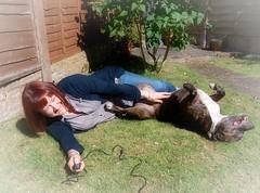 52 Weeks - Week 26 - Archie (World of Izon) Tags: 52weekproject 52weeksofselfportraits selfportrait dog staffordshirebullterrier lawn