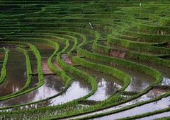 The terraced rice fields, Bali island, Jatiluwih, Indonesia (Eric Lafforgue) Tags: agricultural agriculture asia asian bali2016 balinese breathtaking countryside crops cultivated culture farming farmland fields green growing horizontal indonesia indonesian irrigation landscape lush nature nopeople outdoors paddies reflection ricefields ricepaddies riceterraces rural scenery scenic subak terracefarming terraced terraces terracing unescoworldheritagesite verdant village water jatiluwih baliisland
