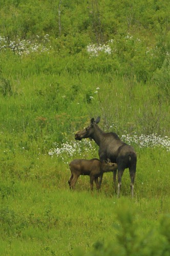 Teat is best.
