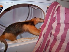 Checking out the drier