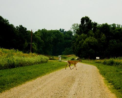 DeerPrairieRoadEmiquonSunrise07252010JGWard_MG_6352