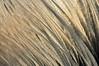 Les semailles et les moissoins! (Photographe Basilique-cathédrale-N-D-Québec) Tags: orange brun contrastes focale ténébreux torsades brindilles