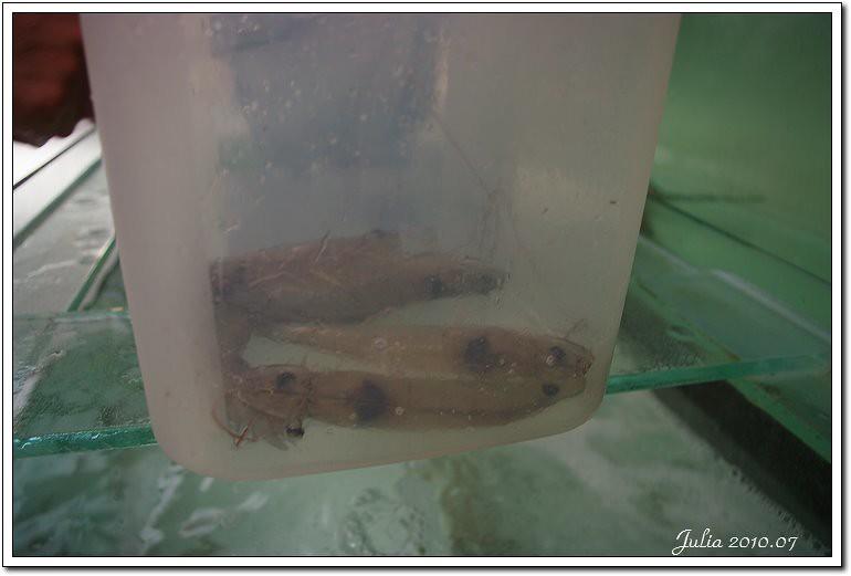 金車鮮蝦 (24)