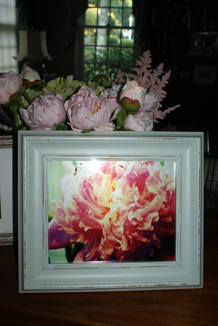 peonie aqua frame best
