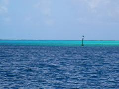 Reef Blues