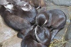 MNZoo 538 (tfangel) Tags: animals zoo minnesotazoo tropicstrail