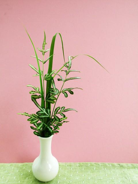 IMG_1249 Lemongrass Leaves and pteris ensiformis victoriae