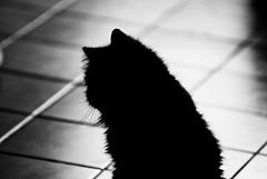 (summerrunner) Tags: summer cats home apple aperture nikon taiwan taipei sep nikkor 2010 d80 80~200mm