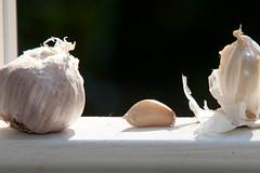 Garlic in the Window