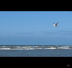 ... (*Lie ... on & off ... !) Tags: flying nikon belgium seagull lie lonely mwe meeuw mouette oostduinkerke 18200mm d90 vlaamsewestkust