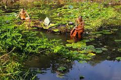 Working together (-clicking-) Tags: life people green nature water work lotus duo working monk together lotuspond pagodar huyenkhongpagodar
