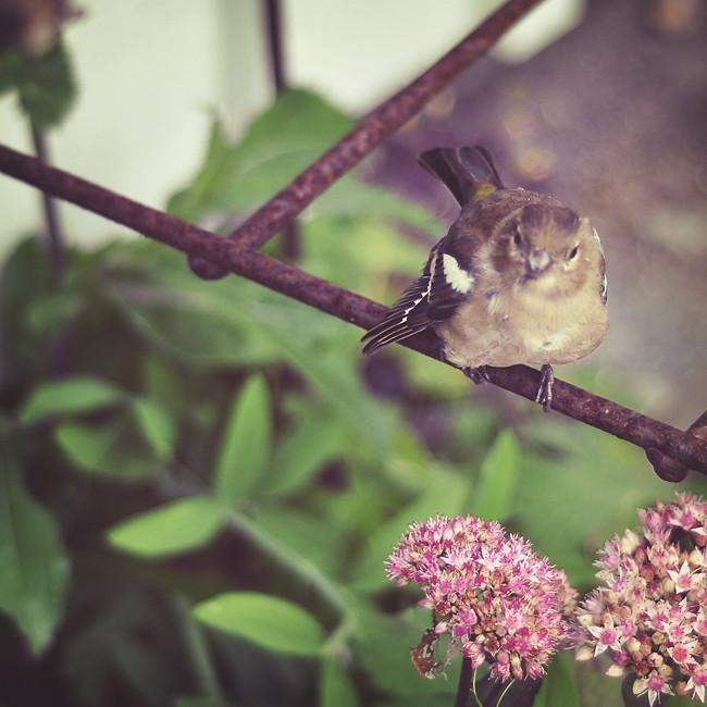 skadad liten fågel
