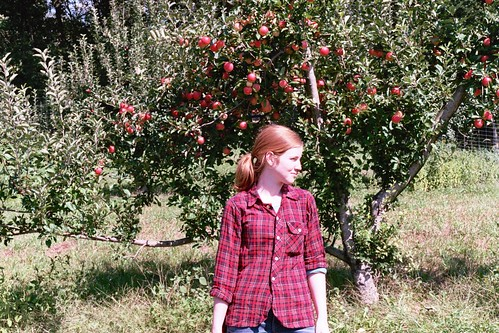 apple orchard.