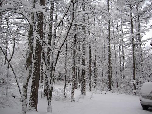 寒波が来た山荘庭 2009年12月19日8:58 by Poran111