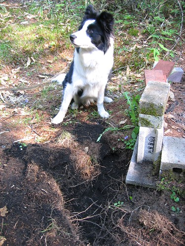 この穴は僕が掘りました I dug this hole. by Poran111