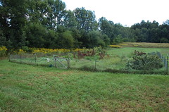 "Garden Overview 2 <a style=""margin-left:10px; font-size:0.8em;"" href=""http://www.flickr.com/photos/91915217@N00/4995244222/"" target=""_blank"">@flickr</a>"
