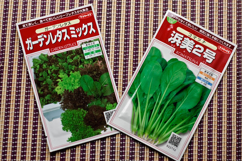 My lettuce