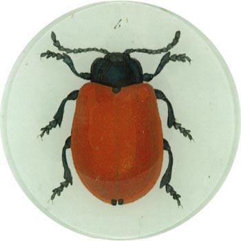 4_Redbeetle plate