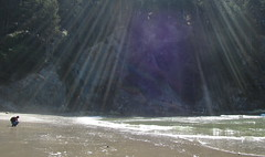 streaming and beaching (carolyn_in_oregon) Tags: oregon carolyn coast pacificocean oswaldweststatepark shortsandsbeach