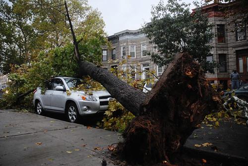 BJN_1152 tree v SUV