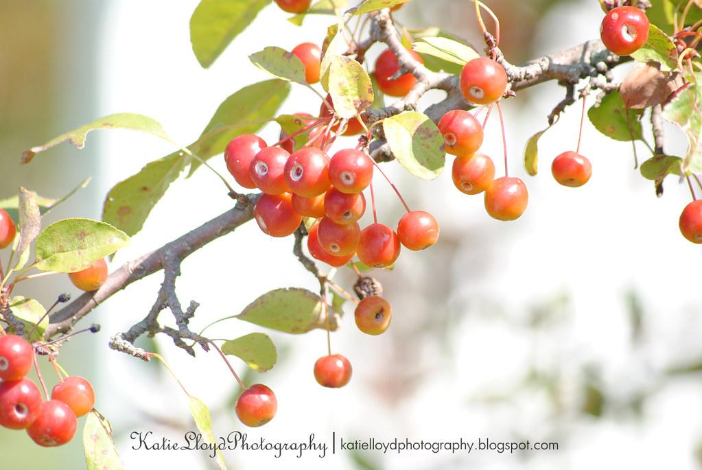 Cherries - sooc