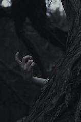 Sanguine Embrace (Brendan_Timmons) Tags: tree dark death woods nikon hand path finger deep bark embrace caress hollow lure alluring deadly lurk sanguine sneak grasp contorted entice 50mmf14g d5000
