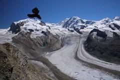 664-15 High Flying Bird (lalande21185) Tags: mountain alps bird glacier gornergrat zermatt chough alpinechough yellowbilledchough dufourspitze gornergratbahn