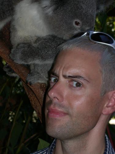 Koala Doo