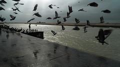 Lonely boy (nandadevieast) Tags: street boy india birds river pigeons panasonic gujarat anurag dwarka 2069 anuragagnihotri lx3 agnihotri nandadevieast gomatighat