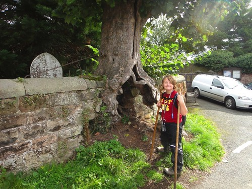Strange tree buried in the church wall Photo