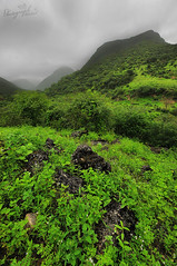 Green Earth ..! (  || WALEED PHOTO) Tags: