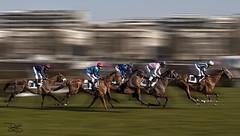 Longchamp Horse Racecourse- Paris, France - Hippodrome de Longchamp (DiGitALGoLD) Tags: horses horse paris france race de french nikon racing jockey pan nikkor panning racecourse f28 d3 longchamp hippodrome 2470mm 2470 digitalgold