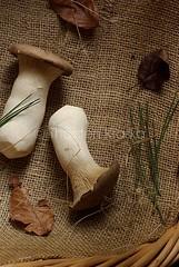 King Trumpet Mushrooms (Thorsten (TK)) Tags: autumn stilllife food fall leaves pine mushrooms still raw basket rustic fresh fungi textures fabric fungus needles pilze conifer foodphotography foodpresentation kingoystermushroom kingtrumpetmushrooms kruterseitling thorstenkraska
