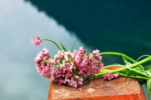 Jiuzhaigou flower2