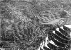 Some of the tallest rice terraces in the world, probably at Batad, Philippines (UW Digital Collections) Tags: philippines farming terraces riceterraces terracing ricefarming batadphilippines