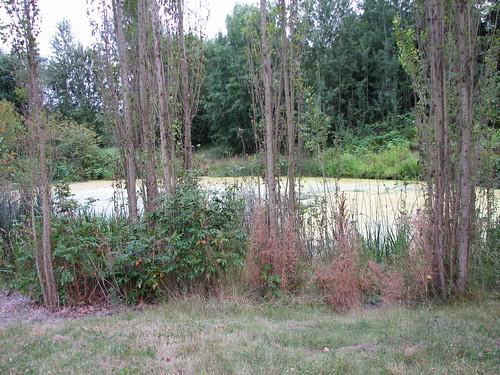 Lorna Jordan Waterworks Garden (1997)-23