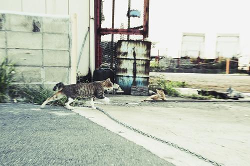 Wakayama city 11