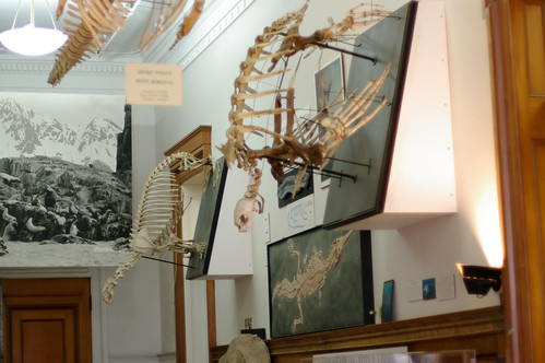 Turtle and seal skeletons...