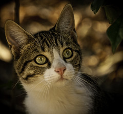 Kittens, vol. 3 (Ganymede: Photography) Tags: madrid park parque up closeup cat eyes nikon kitten raw close kitty retiro brilliant lightroom d60 nikond60 elbuenretiro