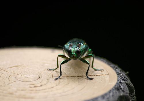 Verde y radiante va el bicho 1