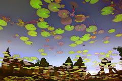 Reflections, from under the water (... Arjun) Tags: flowers 15fav flower reflection water leaves 1025fav 510fav reflections landscape thailand temple iso100 leaf pond asia khmer underwater angle upsidedown lotus pov surrealism under wide perspective dream surre
