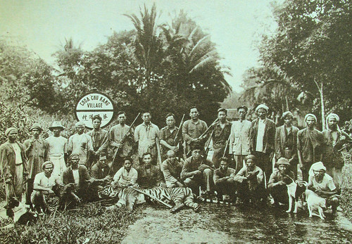 Tigers once roamed Singapore, making meals out of plantation