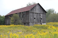 IMG_5408 (chicabrandita) Tags: flowers newyork fall barn ithaca fingerlakes 2010