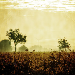 ~ gloomy morning ~ (~ Pixel Passion ~) Tags: gloomy melancholic melancholy melancholia field fog foggy mist misty rape plan flower flowers trees silhouette atmosphere atmospheric mood moody autumn autumnal morning early cold rainy monochrome sepia yellow brown orange sky clouds texture scratches black landscape nature natural gemany lowersaxony