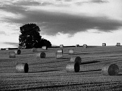 Hay Bales (Wipeout Dave) Tags: blackandwhite landscape evening farm harvest fields agriculture bales northyorkshire haybales northallerton
