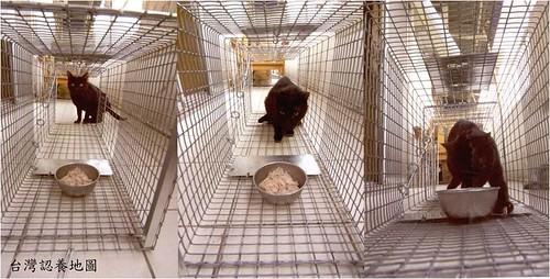 誘捕籠。(圖:台灣認養地圖協會提供)