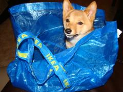 dog crate training dog litter box